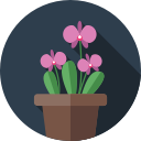 duży wybór roślin