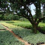 rośliny ogrodowe poznań