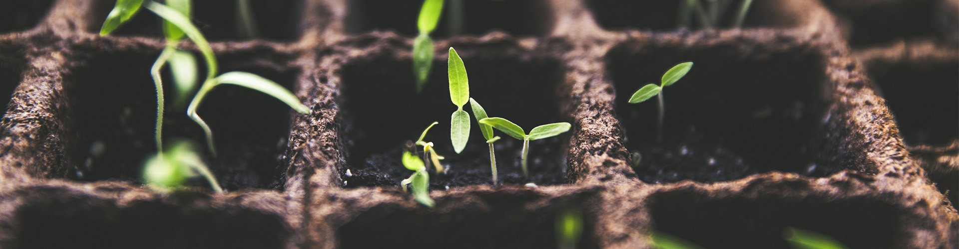 Rośliny w szkółce roślin szyszlandia